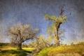 Картинка стиль, деревья, ручей, природа